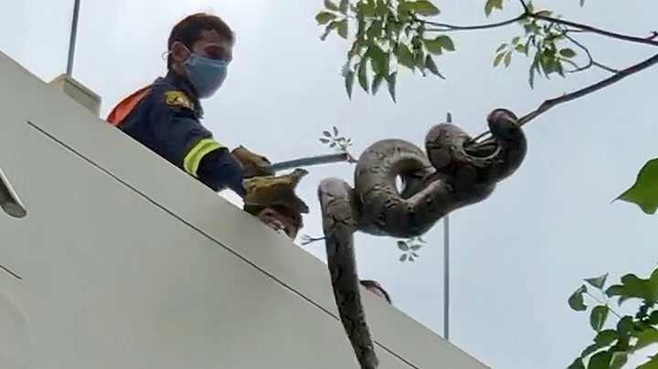 Firefighters catch 11-foot python found in Bangkok park