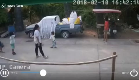 Un nene se salvó de ser aplastado por una palmera