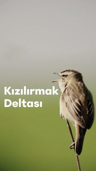 Hayat kısa, kuşlar Dünya Mirası Listesi'nde!