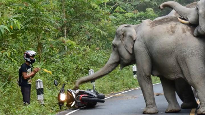 Elefanter skremte livskiten ut av motorsyklist