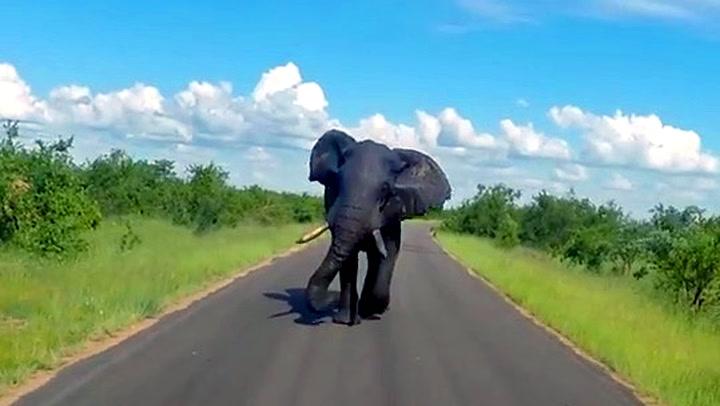 Rasende elefant stormet mot turister