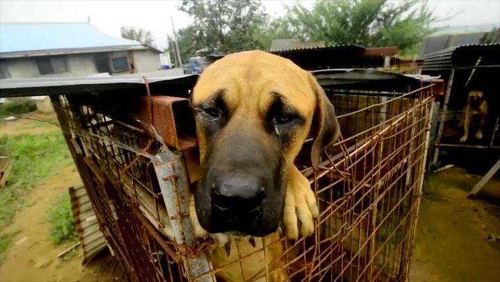 De reddet 149 hunder fra å bli suppekjøtt