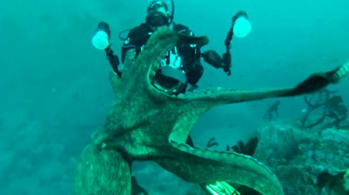 Blekkspruten vil stjele kameraet