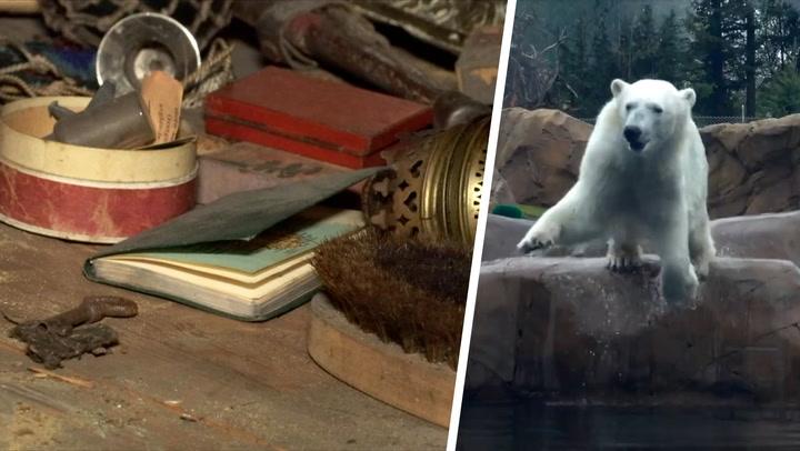 Gamle ting på et loft, isbjørn som stuper ned i vannet