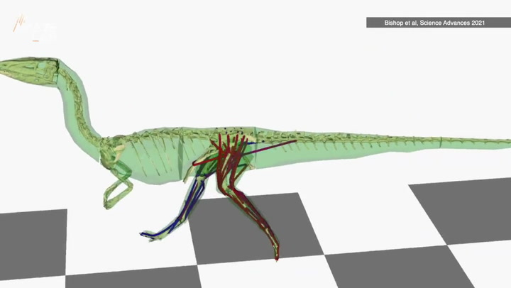 T rex and velociraptors 'wagged their tails' to stay balanced, say researchers
