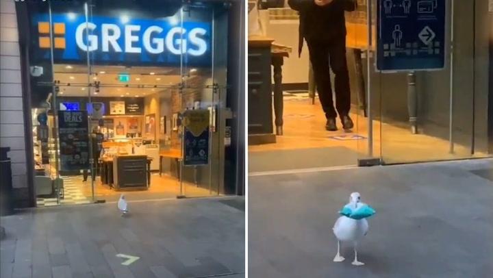 Viral: mira el curioso robo que realiza un ave a minimarket (VIDEO)