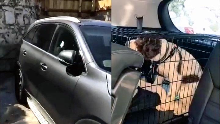 Clive tok grep da han så hunden pesende i bilen