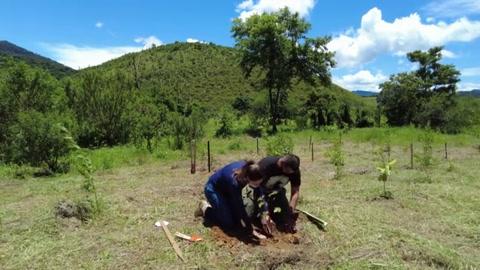 Proyecto plantará un árbol por cada muerto de covid-19 en Brasil