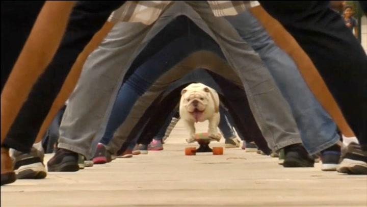 Hunden Otto satte verdensrekord i tunnelkjøring