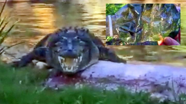 Skjønte noe var galt da krokodillen begynte å hoste