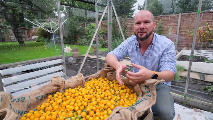 Dad sets Guinness World Record for growing most tomatoes on single truss