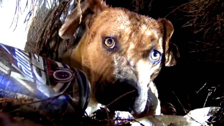 Vettskremt hund med åtte valper reddet fra stormen