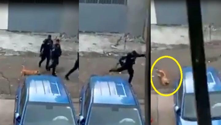 Policía patea a perrito sin motivo y genera la indignación en redes