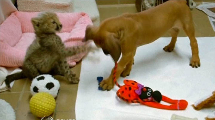 Gepardunge og hundevalp er bestevenner