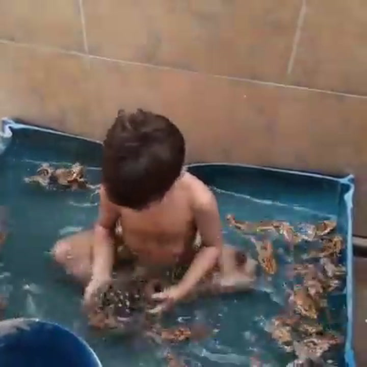 Boy Is Having A Field Day Playing With 20 Frogs In Tub - Digg