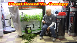 Marijuana Garden Rescue Plant Count Vs Canopy With The Grow Boss