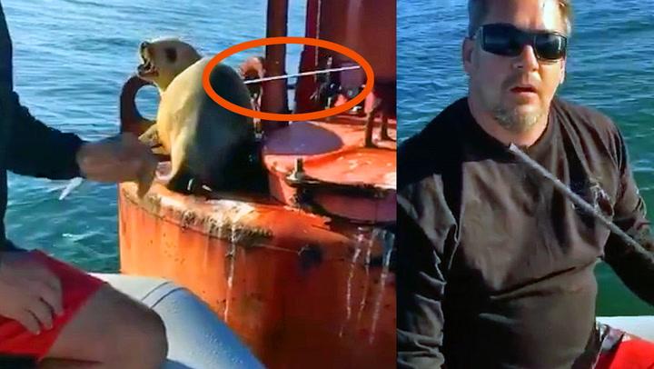 Fiskere fant fortvilt sjøløve med pil gjennom ryggen