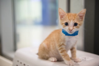 Yoga With Kittens at Miami-Dade Animal Services