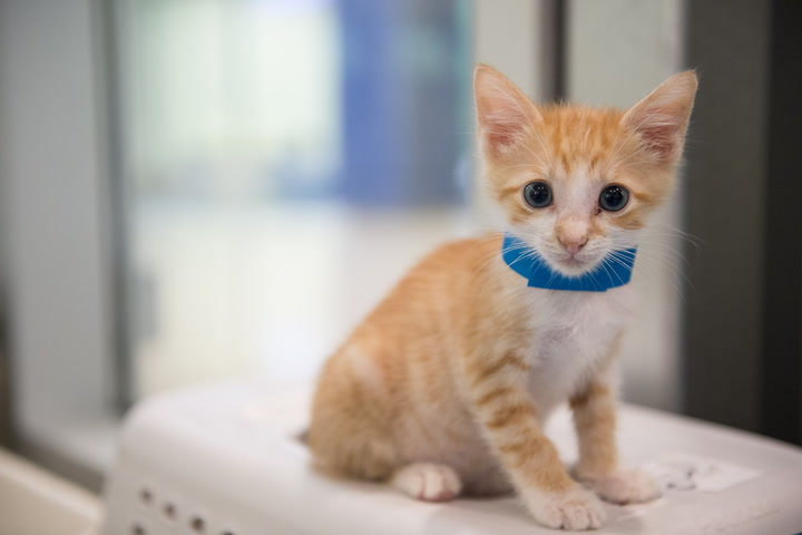 Yoga With Kittens at Miami-Dade Animal Services | Miami