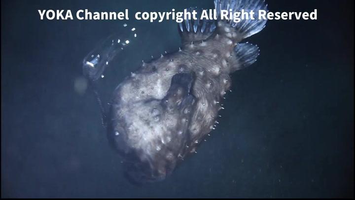 Escalofriante: así es el monstruoso pez que vive a 1000 metros bajo el mar