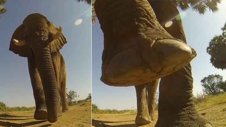 Sånn ser det ut å bli tråkket på av en elefant