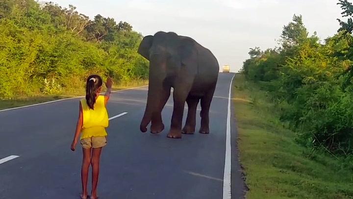 Fryktløs jente stopper elefanten