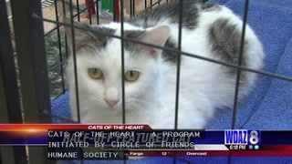 Animal Watch: Circle of Friends offering kitty coupons