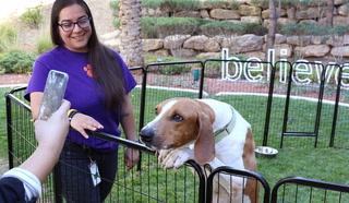 Free pet adoption weekend in Las Vegas