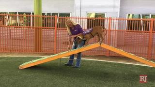 Training canine good citizens in Las Vegas – VIDEO