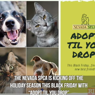 SPCA Free Pet Adoptions Black Friday
