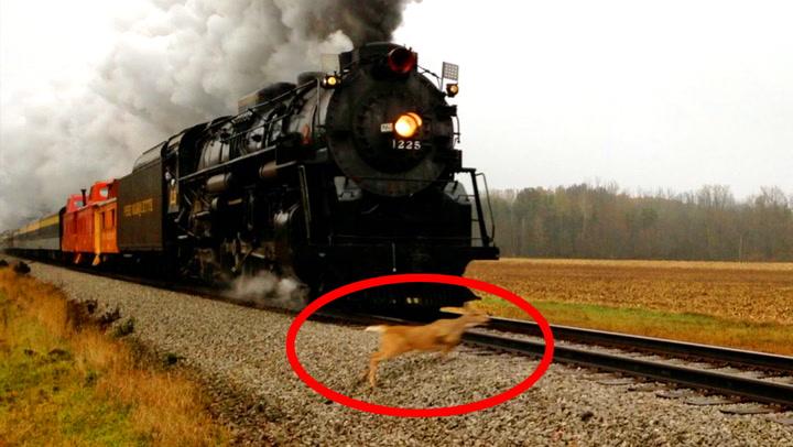 Alle venter spent på historisk tog - så dukker hjorten opp
