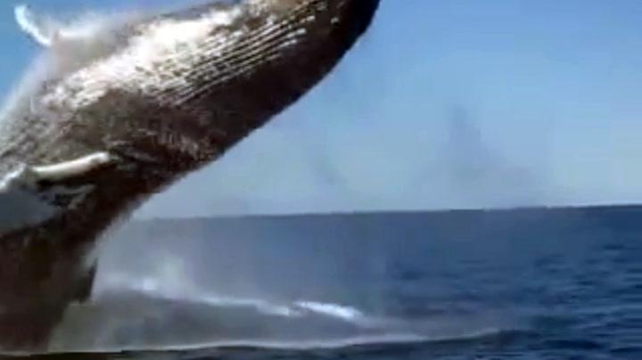 Filmet unikt møte med hval