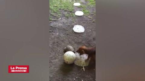 Un perro y una tortuga se enfrentan en partido de fútbol