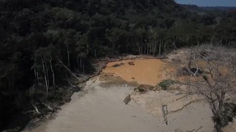 Brasil concentró en 2019 la mayor pérdida de bosques inexplotados, según informe