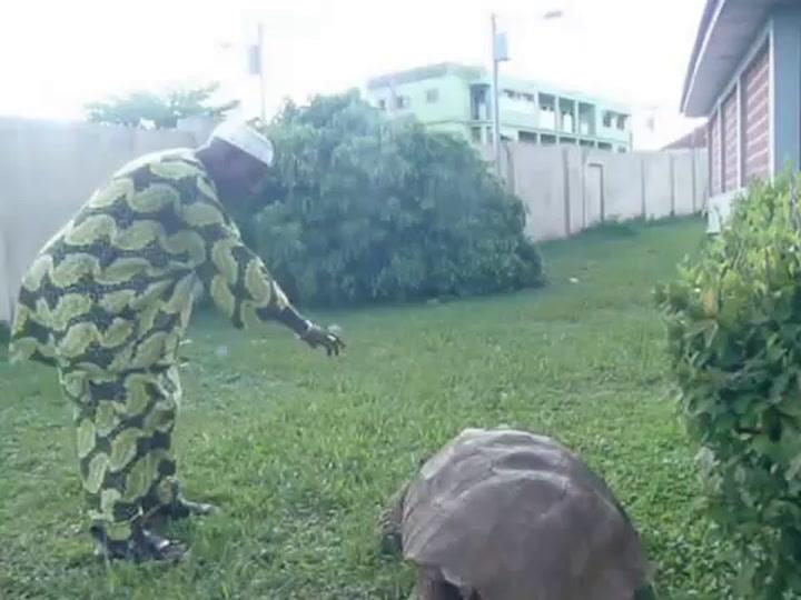 Muere la tortuga más vieja del mundo a los 344 años