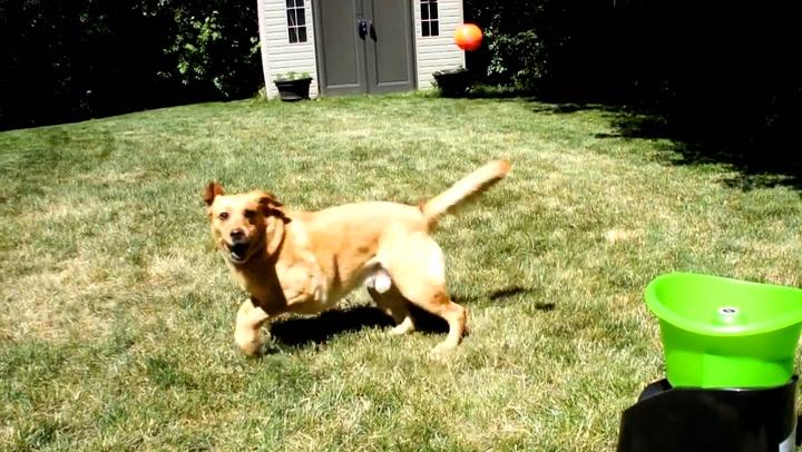 Aldri har noen hatt det så moro som hunden Buddy