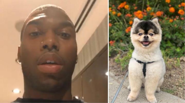 Daniel Sturridge denuncia el robo de su perro