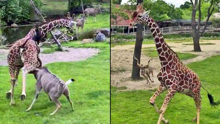 Dyrepassere sjokkerte over dramatisk angrep i dyrehage