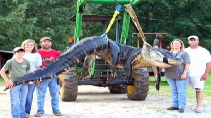Gigantisk alligator satte verdensrekord