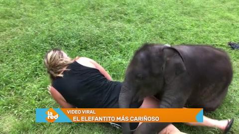 Video viral: El elefante más tierno del mundo