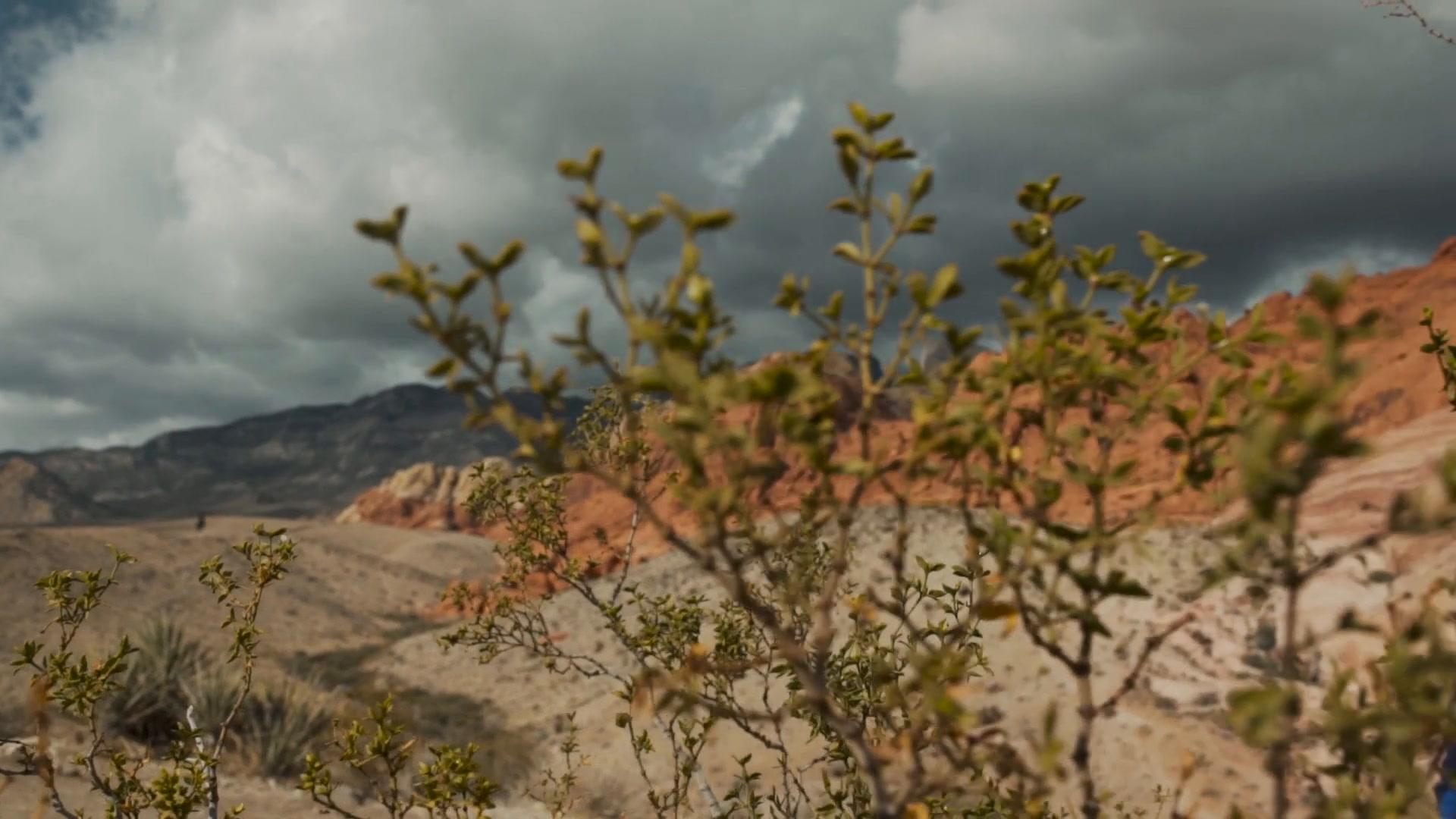 John + Rachel | Utah, Utah | Zion National Park