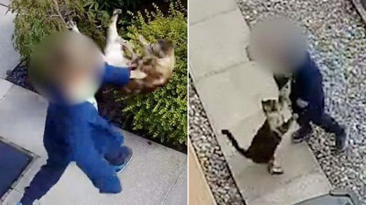 Gutt (5) mishandlet katt - da tok den hevn