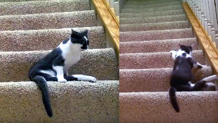 Paralysert katt er dagens helt
