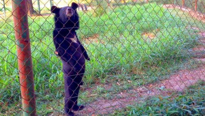 Bjørnen som trodde den var menneske