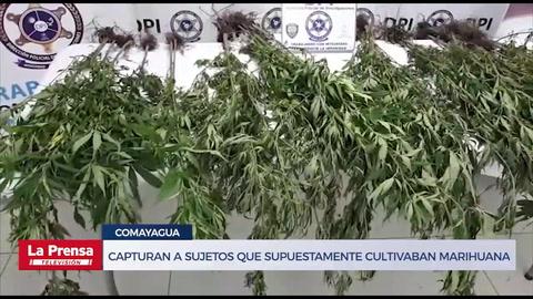Capturan en Comayagua a dos sujetos que supuestamente cultivaban marihuana