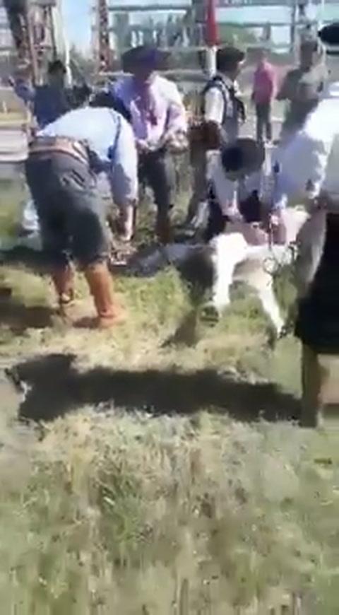 Tristeza e indignación por la muerte de un caballo en una fiesta de doma