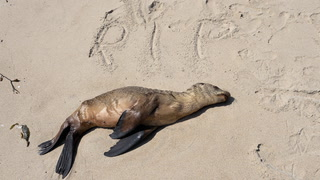 Fukushima blamed for dead sea lions in California