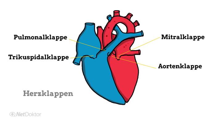 Herzklappenfehler: Ursachen, Symptome, Therapie - NetDoktor