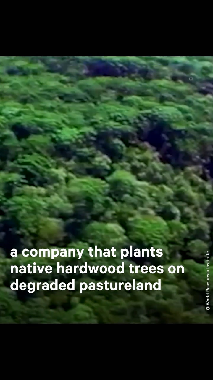 This Former Banker Wants to Reforest Brazil