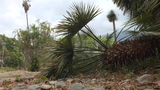 Sin agua, el Jardín Botánico de Caracas busca sobrevivir